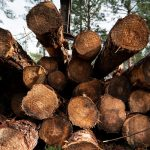 There's a Booming Business in America's Forests. Some Aren't Happy About It.