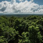 Britain, Norway and the United States Announce a Plan to Protect Tropical Forests.