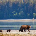 Biden Plans to Restore Protections to Tongass National Forest in Alaska
