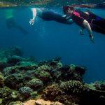 U.N. Says Great Barrier Reef Is 'in Danger.' Australia Bitterly Disagrees.