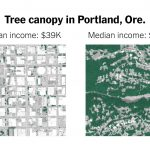 Opinion   Since When Have Trees Existed Only for Rich Americans?