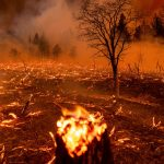 Wildfires Are Intensifying. Here's Why, and What Can Be Done.