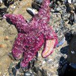 Like in 'Postapocalyptic Movies': Heat Wave Killed Marine Wildlife en Masse