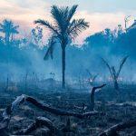 La Amazonía comienza a emitir dióxido de carbono